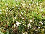 thumbnail - Pflanzenwelt am Rundweg