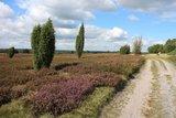 thumbnail - Schleifenroute - Heideblick am Pastor-Bode-Weg zwischen Wilsede und Sudermühlen
