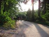 thumbnail - Mountainbiker in Lautenbach