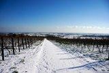 thumbnail - Schneebedeckte Rebenlandschaft