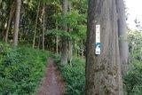 thumbnail - Auf dem Weg zum Aussichtspunkt Wieserkreuz