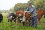 thumbnail - Die glückliche Kuh, Cuxland
