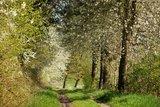 thumbnail - Wanderweg bei Reddehausen
