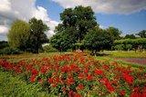thumbnail - Beete und Baumbestände im Schlosspark Bad Bentheim