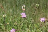thumbnail - Blume am Wegesrand