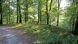 thumbnail - Ruhepunkt im Wald