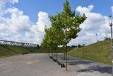 thumbnail - RheinPark Weg in Richtung Rhein