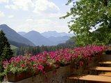 thumbnail - Blumenpracht auf der Wagner Alm