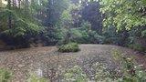 thumbnail - Wald-Teich