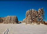 thumbnail - Spuren im Schnee