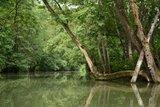 thumbnail - Die Tauber: Fast ein bisschen wie Amazonas.