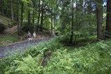 thumbnail - Wandern durch die Spessartwälder