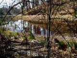 thumbnail - Durch die Bäume kann immer wieder ein Blick auf den See erhascht werden.