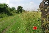 thumbnail - Kamm des Teutoburger Waldes
