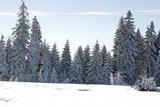 thumbnail - Winterlicher Wald