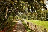 thumbnail - Naturerlebnis Wald