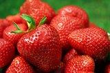 thumbnail - Frische Erdbeeren aus dem Spreewald