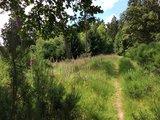 thumbnail - Waldweg mit blühendem Digitalis/Fingerhut