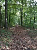 thumbnail - Waldbereich zwischen Dainbach und Bad Mergentheim