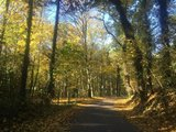 thumbnail - Herbstimpression auf dem Weg nach Noppenberg
