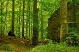 thumbnail - Ruine Burg Rabenswald
