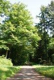 thumbnail - Idyllischer Radwanderweg im Wald