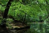 thumbnail - Die Teiche bei Grubmühl