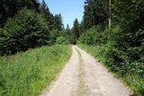 thumbnail - Wegeverläufe entlang blühender Wiesen und durch ruhige Wälder