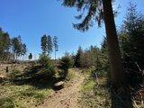 thumbnail - Waldpfade auf dem A1