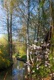 thumbnail - Frühling im Spreewald