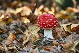 thumbnail - Natur - Oben im Harz