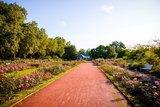 thumbnail - Im Rosengarten am Elberadweg