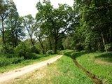 thumbnail - Weg bei den Krugsweihern
