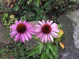 thumbnail - Blumen