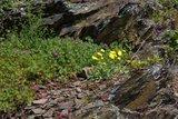 thumbnail - Blumenvielfalt
