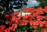 thumbnail - Rhododendronblüte vor dem Albert Bad