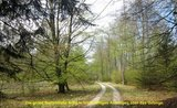 thumbnail - Passweg durch den Buchenhochwald