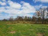 thumbnail - Auf der Wanderung kann man am Waldrand mit Glück einheimische Tierarten beobachten.