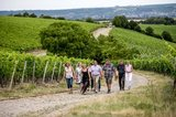 thumbnail - Über Stock & Wein - Von Rüdesheim nach Assmannshausen