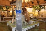 thumbnail - Jagdmuseum Wulff in Oerrel