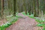 thumbnail - Kammweg auf dem Kleinen Freeden