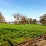 thumbnail - Bernrieder Parklandschaft