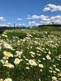 thumbnail - Rund um Stiefenhofen bietet herrliche Aussichten auf Oberstaufen