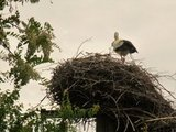 thumbnail - Der Storch dreht sich einfach nicht um...
