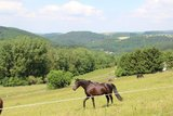 thumbnail - Pferdekoppel bei Naurath