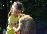 thumbnail - Kind beim Füttern eines Berberaffen
