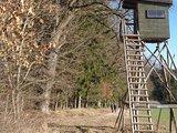 thumbnail - Am Waldrand des Waldgebietes Tannet