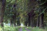 thumbnail - Waldweg im Heide- und Teichland