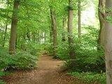 thumbnail - Naturnahe Wegeführung der Variante via Bethelauen