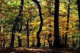thumbnail - Herbstwald